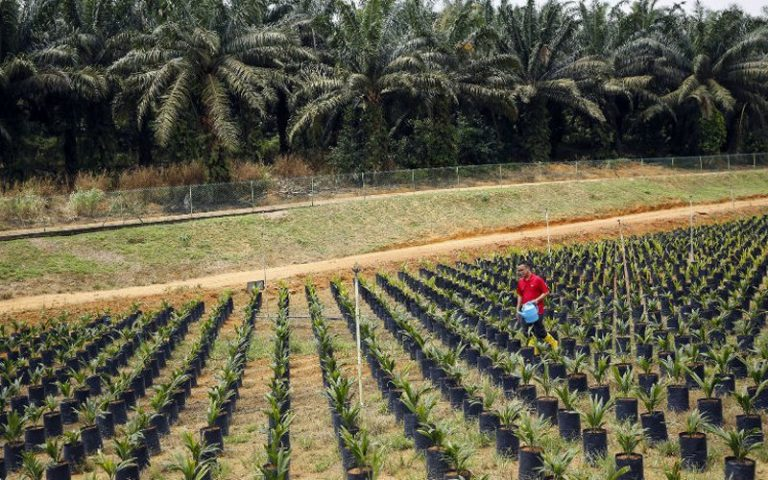 Palm oil deforestation in Indonesia costing firms up to US$10 bil