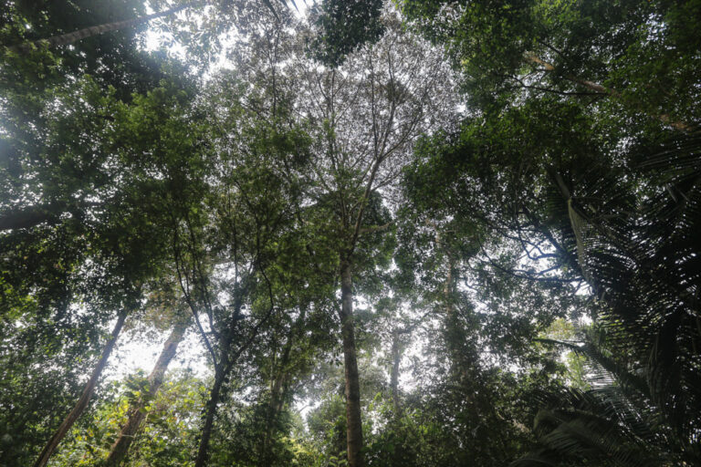 Forestry Dept says it remains committed to ensuring visitors' safety at permanent forest reserves